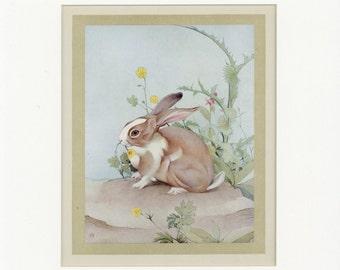 Beautiful Domestic Farm Animals Vintage 1921 White-tails Rabbit Print