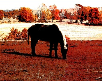 Grazing Black Horse, Western Art, Southwestern Totem Animal, Autumn Colors, Texas Fall Home Decor, Wall Hanging, Giclee Print, 8 x 10