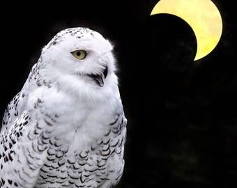 snowy owl crescent moon photograph, spirit animal bird photo, yellow white black home decor, dark clarity spiritual art print magic meditate