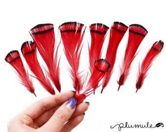 Pheasant Feathers - Natural Lady Amherst Pheasant Tippet Feathers - Red (12pcs)