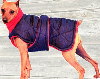 Miniature Pinscher Winter Coat, Custom made with quilted and insulated nylon, tummy panel and fleece turtleneck/snood