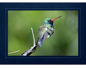 Hummingbird Cards - Broad-billed Hummingbird Card - Blue Green Hummingbird - Custom Hummingbird Cards - Handmade Hummingbird Cards