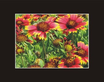 Jo Bell Flower Ocracoke Photographic Print matted in black sand coastal North Carolina