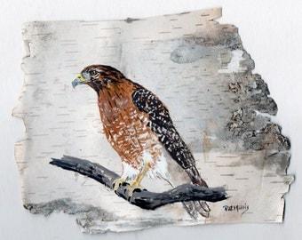 Red-Shouldered Hawk Hand Painted on Birch Bark, Framed