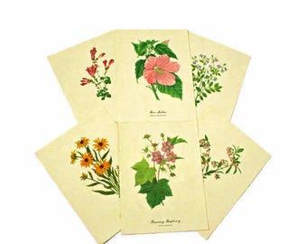 Botanical Prints  /  6 Floral Prints  /  Black Eyed Susan  /  Pineland Blueberry  /  Rose Mallow  /  Jacobs Ladder  /  Flowering Raspberry