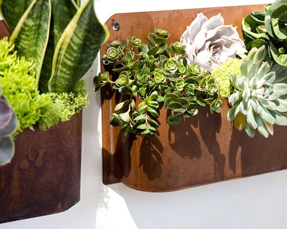 Hanging planter succulent planter air plant planter copper for Indoor succulent wall