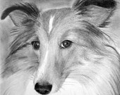 ON SALE Custom Pet Portrait From Your Photo - 11x14 Original Personalized Pencil Sketch Drawing From Picture