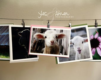 your collection - five freshly picked cards - fine photography and farm fresh images