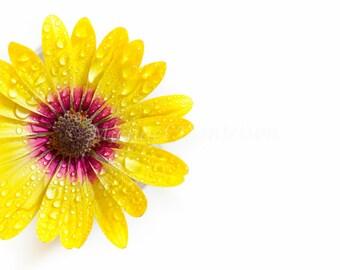 Yellow Purple Flower Photograph Print 8x10