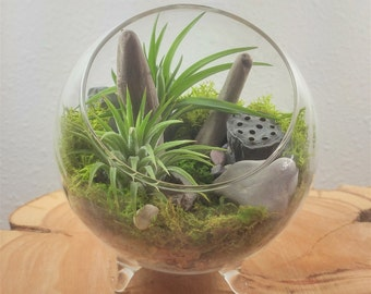 Air Plant Terrarium Kit by Midnight Blossom - DIY Mini landscape Featuring 2 Air Plants, Driftwood, Moss and More