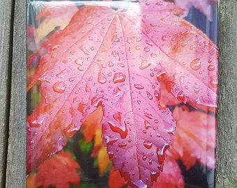 """4"""" x 4"""" Fall Color in the Rain, Resin Coated"""