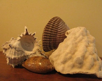 Under Sea Window, Ocean Vignette, Pieces from Old Collection Coral, 3 Shells, Aged & Weathered by the Sea, Cabinet of Curiosities Vibe