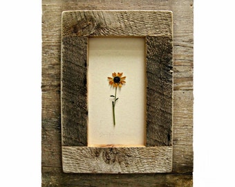 Brown Study (in Sunflowers) .||. Framed in Barnwoood