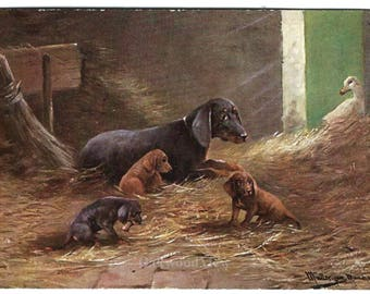 Hound Dogs & Duck Signed Postcard, Mother and Puppies, Artist Anton Muller, Antique Victorian 1912 Color Ephemera, FREE SHIPPING