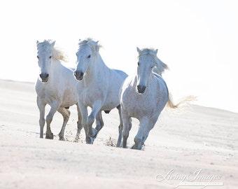 Three at the Beach - Fine Art Horse Photograph - Horse - Camargue - Fine Art Print