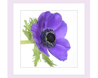 Flower Birthday Photo Card, Anemone Card, Flower Notecard, Floral Birthday Card, Purple Birthday Card, Note Cards