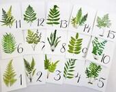Fern Table Cards, Fern Table Numbers, Woodland Table Numbers  Wedding Table Card, Wedding Botanicals, Fern Weddinge Cards, Garden Table W109