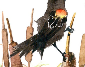 ACEO limited EDITION (2/25) of an ACEO original watercolor painting, bird art print, Song of the marsh, Red winged blackbird