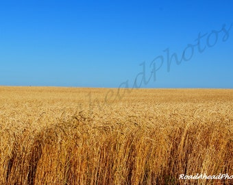 Oklahoma Wheat Field photograph Route 66 8 x 10 matted photo