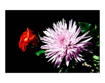 Rose and Petals, Photograph, Art Print, Wall Art, 8x10