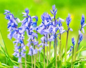 flower print, bluebell print, floral art print, nature photography, flower photography, floral print, home décor art, wall art prints