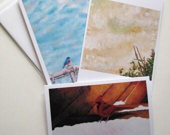 Birdwatching Art Greeting Card Set - Eastern Bluebird, Northern Cardinal, Japanese White Eye
