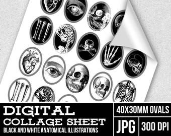 40x30 Digital cameos collage sheet - Black and white anatomical illustrations - Printable collage sheet - Digital resources