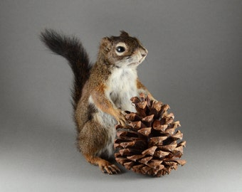Taxidermy Squirrel with Pine Cone