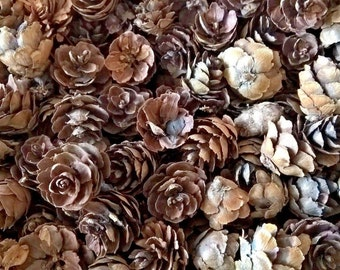Tiny Pine Cones - Natural Color - Winter  Decoration - 500g