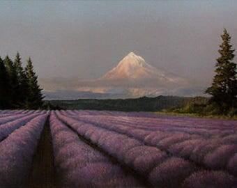 English Lavender angustifolia seeds / Organic / NON GMO / Medical Use