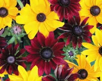PBRU)~RUBY GOLD Rudbeckia~Seeds!!!!~~~~~~~Dual Colored flowers!