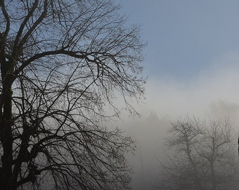 Winter Tree in the morning mist | nature photography | tree photography | mist photography