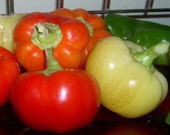 Sweet Pepper Plant, Alma Paprika Heirloom