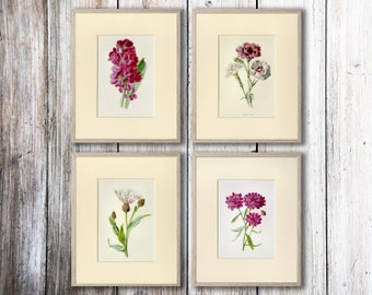 Spring Flowers Art Prints C.1890, Mix and Match any 4 by S. Hibberd - Wall Art, Home Decor, Gift Idea - Matted 8x10 - Buy 4 and SAVE