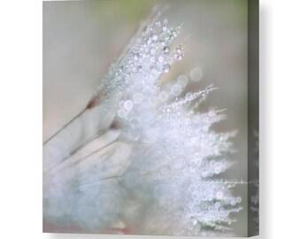Dandelion Canvas, Dandelion Art,  Neutral Wall Art, Flower Canvas, Square Wall Art, Neutral Decor, Bokeh Art, Flower Photography,Water Drops
