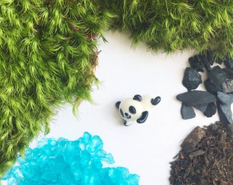 Baby Panda DIY Terrarium Kit, Moss Terrarium