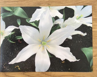 White tulip photo card A5 from Eden project blank inside