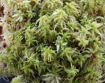 Fresh Live Sphagnum Moss (For Terrariums, Moss mats, Fairy Gardens)