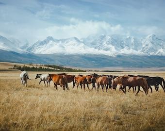 Wild Horses, Mongolia. Blue and beige. Fine Art Photography, Wall Decor, Large Print, Cabin Art, Cabin Decor, Nature Print