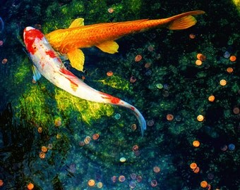 """Metal Art Print """"Lucky in Love"""", Koi Photography Printed on Aluminum with Flush Frame, Various Sizes, Special Order"""