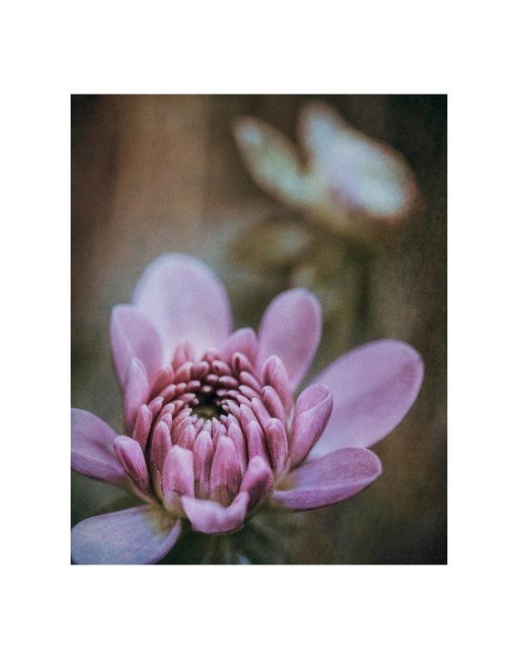 Flower photography, flower photo, floral photo, flower art print, floral art print, botanical photo, dahlia bud photo, lavender dahlia bud