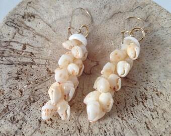 Hawaii Niihau Shell Earrings Momi with Puka Shells Pikake Style