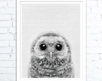 Owl Decor, Owl Print, Woodlands Nursery Wall Art, Printable Poster, Black White and Grey, Animal Photo, Kids Room, Digital Download