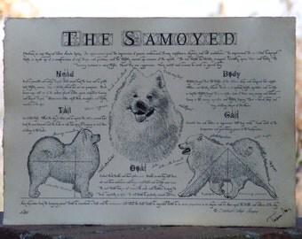 Antique styled dog standard - Samoyed
