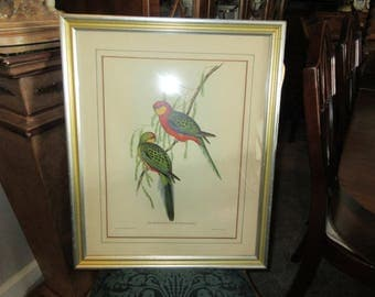 J GOULD PARROT Lithograph Art Wall Hanging