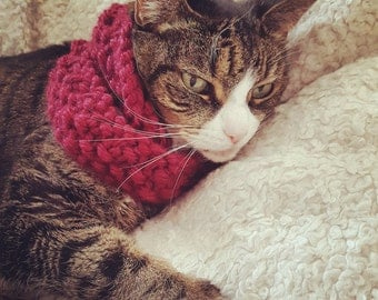 Cat Infinity Scarf // handmade seed stitch infinity scarf for cats