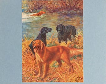 1930's Curly Coated & Golden Retriever Dogs Art Print by E. H. Miner