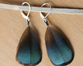 Lady Amherst Iridescent Feather Earrings