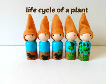 educational gnome dolls,FREE SHIPPING,life cycle of a plant, learning toys,peg dolls,wood toys,spring toys,summer toys,gnome dolls,dollhouse