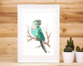Green Cheeked Conure Print